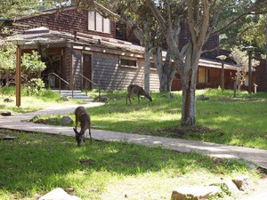 Improved paths and living spaces at Asilomar